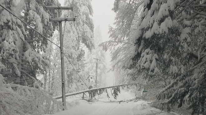 Pictured is downed tree over a power line in snow-covered Skykomish.